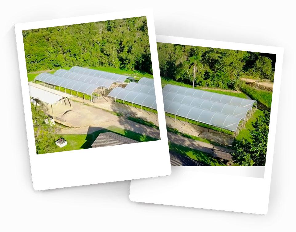 Khaya-grandifoliola-(mogno-africano)---Forte-Florestal---Investimento-Madeira-Nobre3